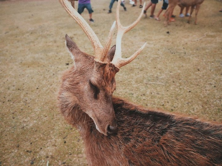 Bicol Photo Diary: Panoramic views and the Deer Farm in Ocampo